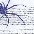My mother's little spider stories