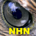 Go to the profile of NewsHawk Network
