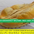 Go to the profile of Jual Bibit Durian Bawor