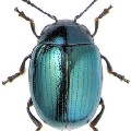 Go to the profile of Hi. I'm Just a beetle. . . .