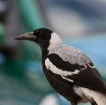 Go to the profile of Magpie Woman.