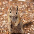 Go to the profile of Earth Chipmunk
