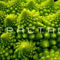 Go to the profile of Fractal