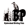 HBP Birdwalks