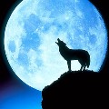 Go to the profile of lonewolfbc