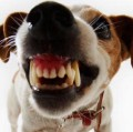 Go to the profile of Jack Russell
