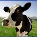 Go to the profile of Cowbridge Moos