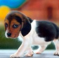 Go to the profile of Puppy