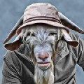 Go to the profile of Ugly Old Goat