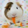 Go to the profile of Piggy Patch