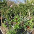 Permaculture Pully