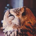 Go to the profile of The Owl