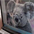 Go to the profile of Digital KOALA