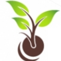 Go to the profile of OrgHarvest Cannabis