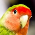 Go to the profile of The Parrot