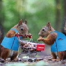 A Tale of Two Squirrels: The Not So Simple Math on Venture Portfolio Size