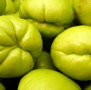 Eat the Chayote