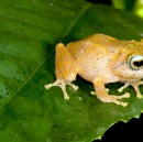 Hunting for frogs in the Western Ghats