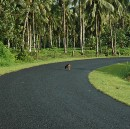 The Main Road, Samoa