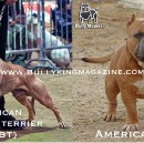 History Of The American Pit Bull Terrier & The Evolution Of The American Bully