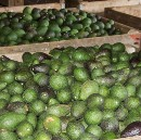 Under Review: Avocados — A Closer Look at Their Nutritional Value. Do They Live up to the Hype?