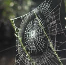 From spider silk shoes to algae fuel, welcome to the new age of biotech