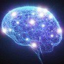 The Brain Has More Than 100 Times Higher Computational Capacity Than Previously Thought