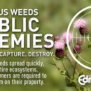 10 Reasons Weeds Are the Future of Food
