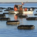 Aquaculture Could Feed The World And Protect The Planet — If We Get It Right