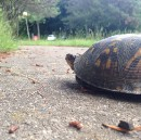 Turtles Are Crossing the Road
