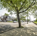 To Protect Vulnerable Populations, Plant More Trees