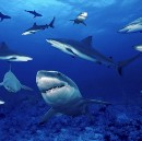 Rising above the Shark-Infested Waters of Design