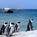 Penguins, (near) Cape Town, South Africa