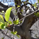 A Guide to Pruning Fruit Trees