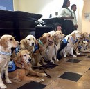 A Trump Public Service Announcement — Demanded By Our Therapy Dogs