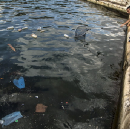 Costa Rica wants to be the first country to ban all single-use plastics