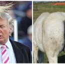 If Everybody In Trump's World Were An Animal, Here's What They'd Be