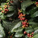 What's Special About Specialty Coffee?