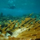To Save Corals, Stop Burning Fossil Fuels