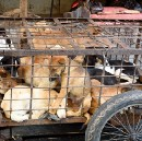 Lessons From Yulin: