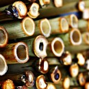 Cracking the Bamboo Ceiling: On Debunking the Survivalist Immigrant Mentality