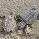 What You Can Do to Help Sea Turtles