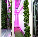 Square Roots Launches Urban Farming Accelerator Using Freight Farms Platform