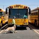 What If Schools Hired Dogs As Therapists?