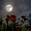 """When the moon rises, its light is pleasant, and we enjoy it and feel happy…"