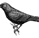 Genius in the Trees: What is it about Crows?