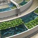 Aquaponics with AI?