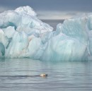 Polar Bears at Ground Zero for Climate Change, Climate Science Deniers