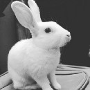 An Eulogy For My Pet Bunny.