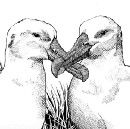 The Surprisingly Human Love Lives of Birds
